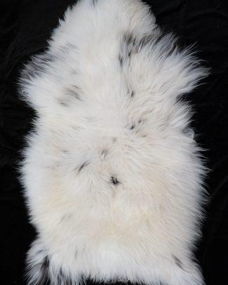 Schapenvacht wit gevlekt, sheepskin white spotted, Schafsfell weis entdeckt Texelse Schapenboet sheepskin white